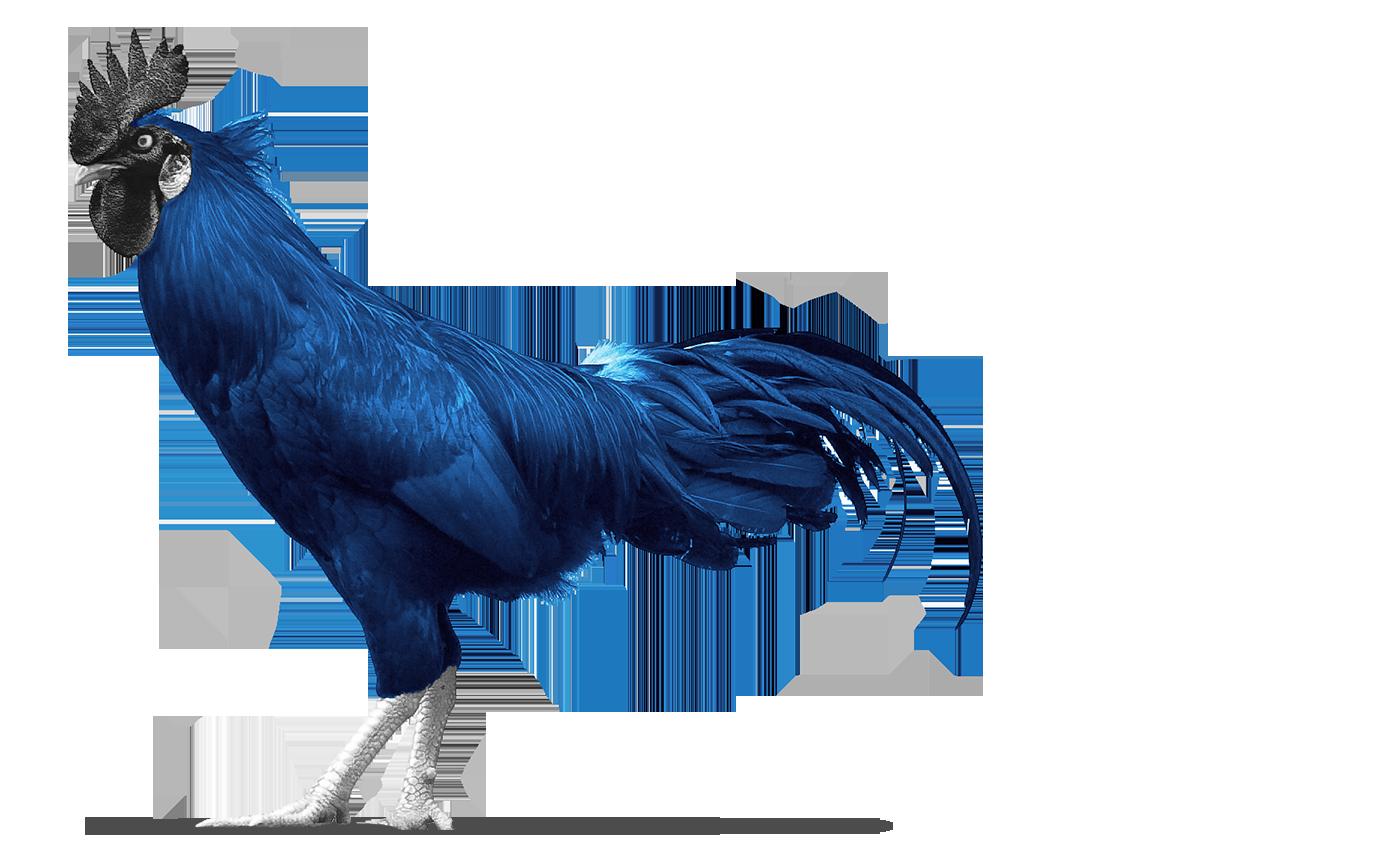 Blue rooster left